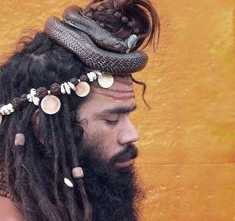 Picture of Indian Sadhu Meditating with Snake on Head