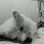 Picture of Russian Dog Experiment - A Living Decapitated Dog