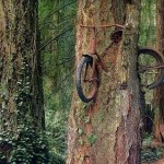 Picture about Tree that Ate a Bicycle
