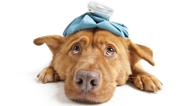Picture about Dangerous Virus Killing Dogs