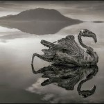 Picture Suggesting This Lake Natron in Tanzania Kills, and Makes the Corpse Turn Stone
