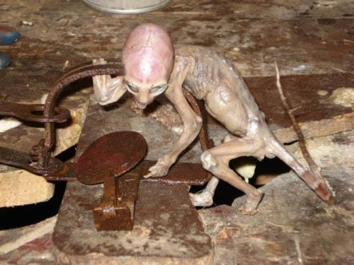 Baby Alien Found in Mexico Farm: Facts