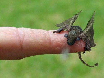 Picture of Newly Hatched Baby Dragon