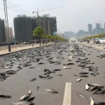 Photographs Showing Fish Rain in Thailand Streets