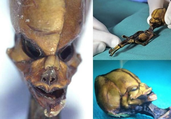 Picture Suggesting 6-Inch Mysterious Alien Skeleton Discovered in Atacama Desert