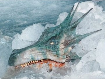 Picture Suggesting Real Dragon Found Alive in a Cave, Video