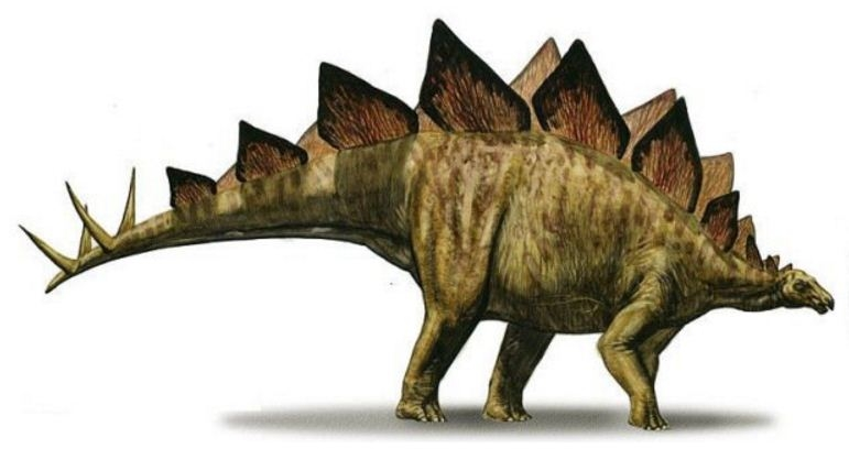 Picture of Stegosaurus