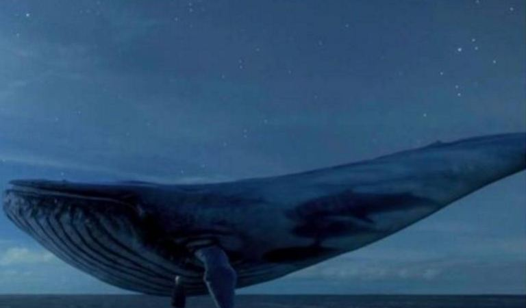 Blue Whale 'Suicide Dare' Game Inflicting Deaths in Many Teenagers on Social Media: Facts