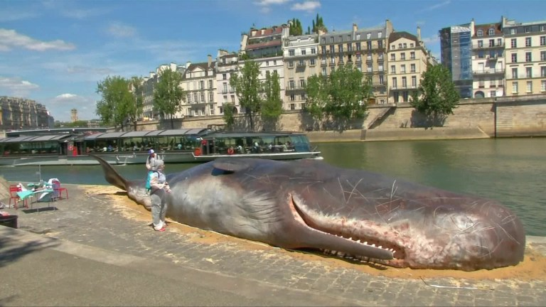 Picture about Dead Whale Washed Up in Central Paris Shocks People
