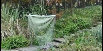 Picture from Invisible Fabric Invented by Chinese Scientist, Video