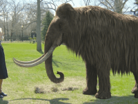 Scientists Successfully Cloned Woolly Mammoth Picture