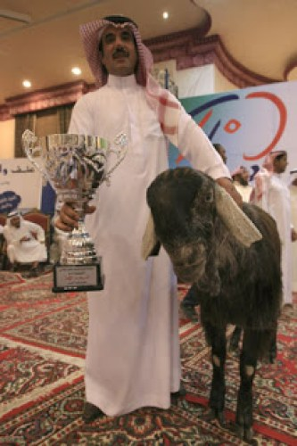 Image of Damascus Goat Prized Species