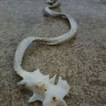 Image of Dragon-like Creature Found on New Zealand Beach