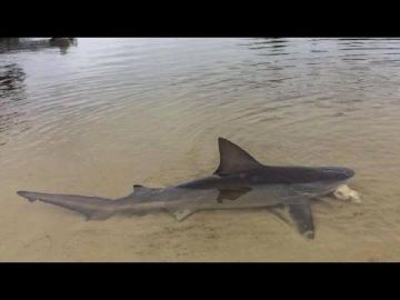 Image about Shark Found Washed Up Ohio River Boat Ramp