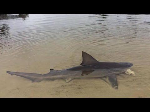 Shark Found Washed Up Ohio River Boat Ramp: Fact Check