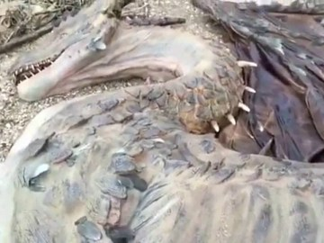Image about Man Found Dead Dragon on Remote Island, Video