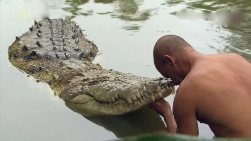 Image of Kerala Lake Temple's Crocodile Babia