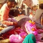 Image of Last rites of Crocodile Gangaram