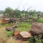 Image about Over 1000 Trees Felled for PM Modi's Helipad in Odisha