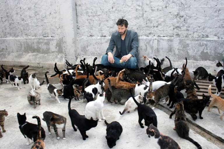 Image about Actor Keanu Reeves Saved Many Cats from Euthanasia