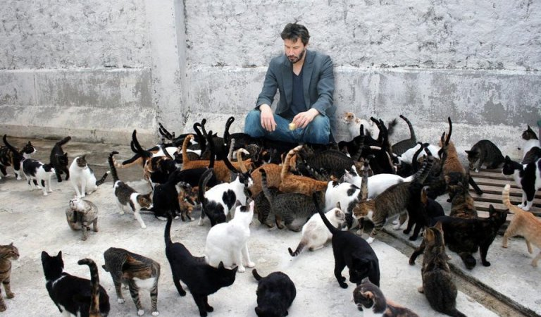 Actor Keanu Reeves Saved Many Cats from Euthanasia: Fact Check