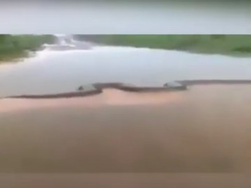 Image about Huge Snake Swimming in Amazon River, Helicopter Spotted