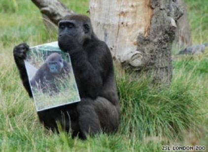 Picture of Another female Gorilla holding the photograph closely