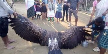 Image about Mythical Garuda Bird Found Dead in Cyclone Fani
