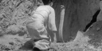 Image about Witch Dancing with King Cobra in Burma, Video