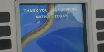 Image from Woman Spots Snake Inside Gas Pump Screen, Video