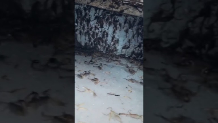 Image about Scorpions Rain in a Rajasthan Village, Viral Video