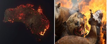 Images about Fake Stories from Bushfires Tragedy in Australia