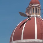Image about Video of Big Strange Bird on Italy Church