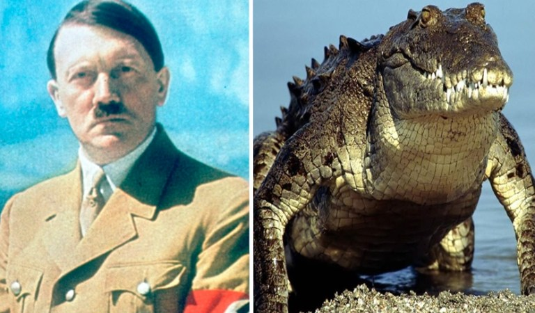 Nazi Leader Adolf Hitler Had a Pet Alligator, Saturn: Fact Check
