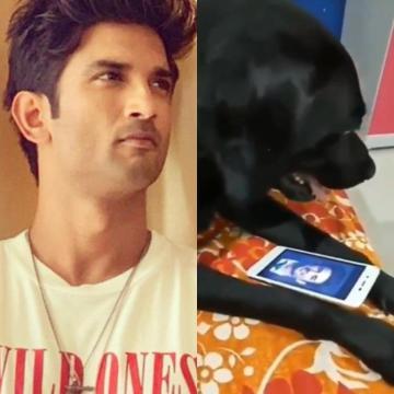 Image about Sushant Singh Rajput's Pet Dog Fudge Dies