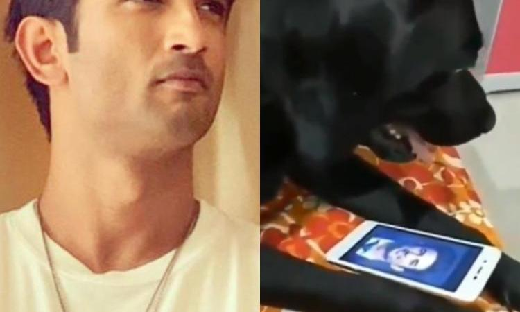 Sushant Singh Rajput's Pet Dog Fudge Dies: Fact Check