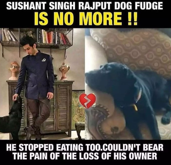 Image about Sushant Singh Rajput's Pet Dog Fudge Dies
