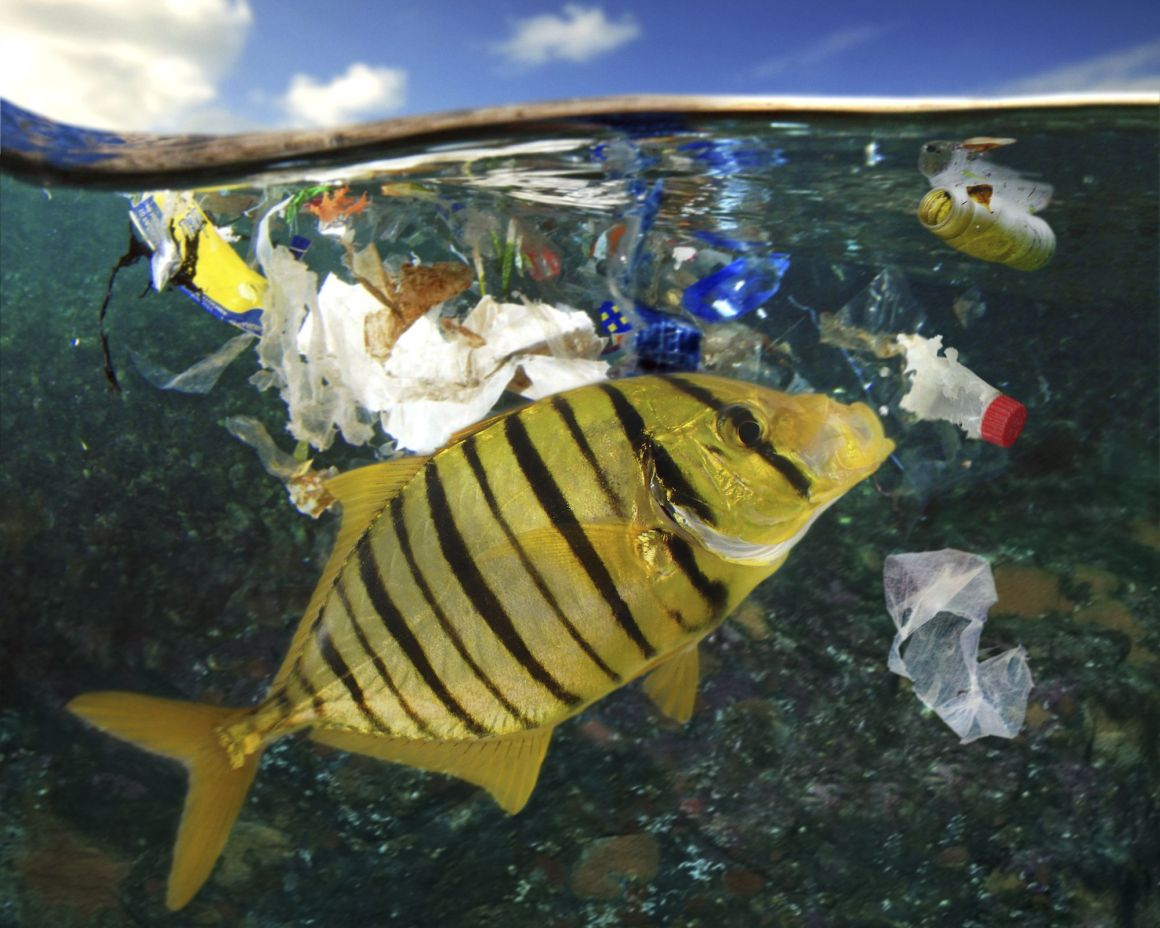 Image of Marine animals feeding on plastic