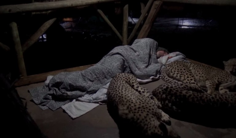 Cheetahs Sleeping with Servant in Temple, Amazing Video: Fact Check