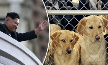 Image about Kim Jong Un Orders N Koreans to Give Up Dogs for Meat