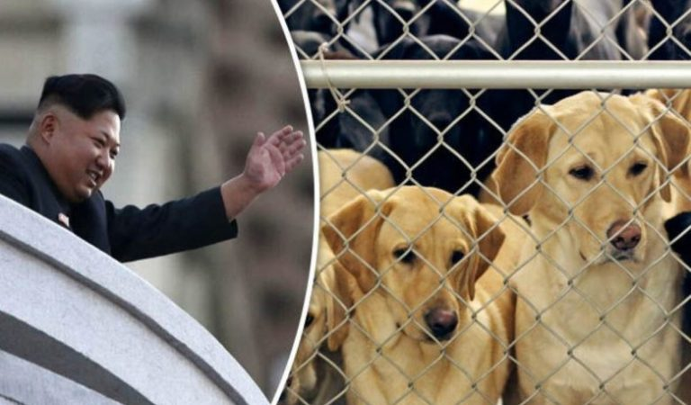 Kim Jong Un Orders N Koreans to Give Up Dogs for Meat: Fact Check