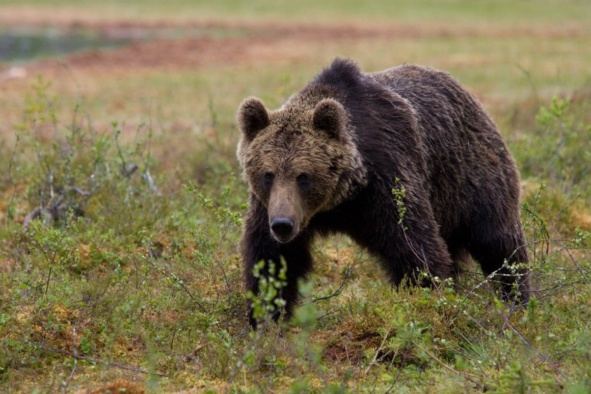 Stock photograph of the bear