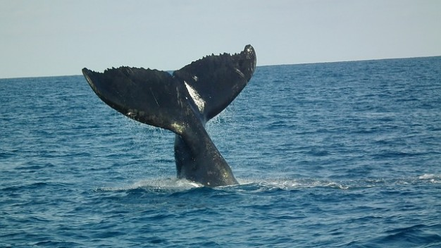 The whale on the middle of the ocean.