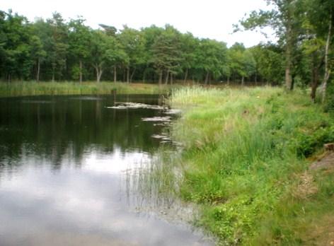 Ideales Schleiengewässer gute Angelzeit auf Schleien, wenn der Roggen blüht