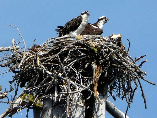 Hungrige Jungvögel warten auf Futter