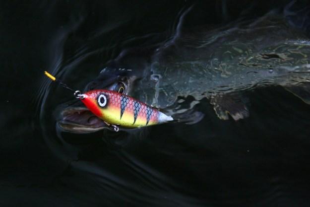 Hecht angeln