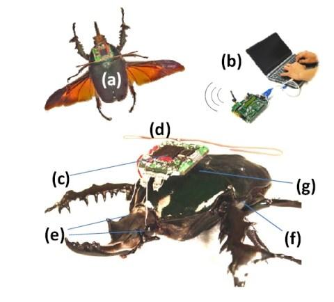 insetti-radiocomandati-z1.jpg