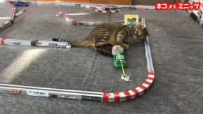 Giappone: Gatto contro un automodello RC!