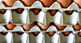 Eggs recalled over fipronil contamination.