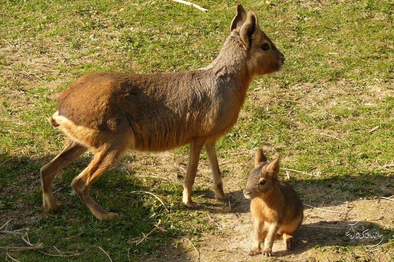 Maman et Bébé Mara